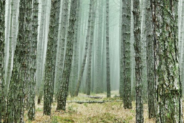 wood-3107139_1280